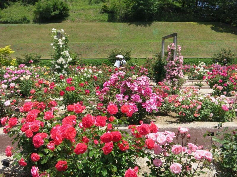 花フェスタ記念公園2_e0233674_1744187.jpg