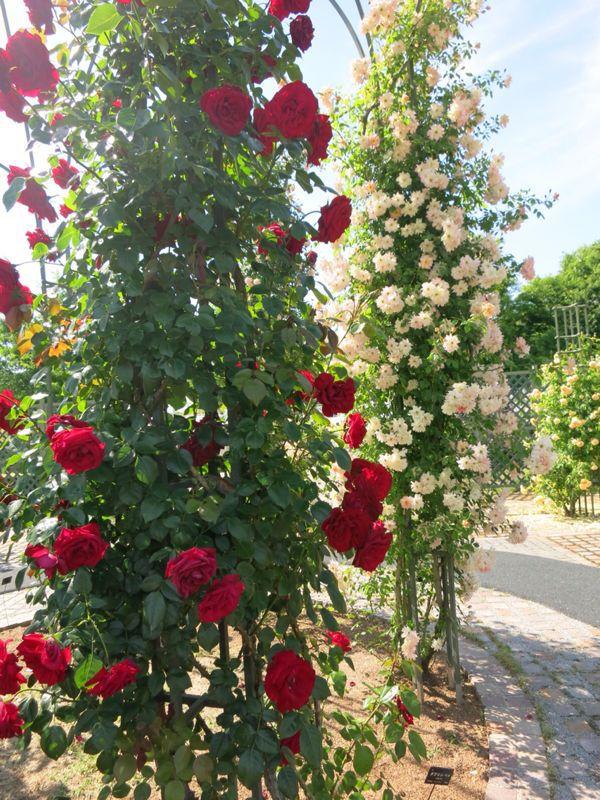 花フェスタ記念公園2_e0233674_1745242.jpg