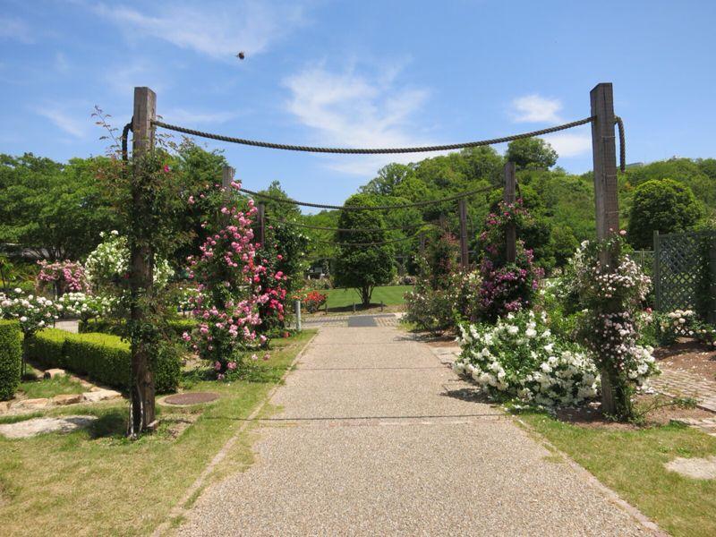 花フェスタ記念公園2_e0233674_1745319.jpg
