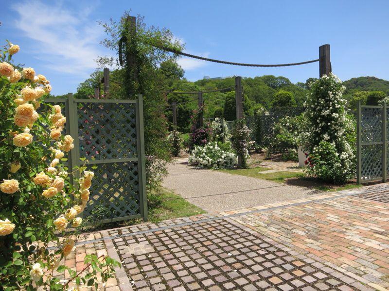 花フェスタ記念公園2_e0233674_1745380.jpg