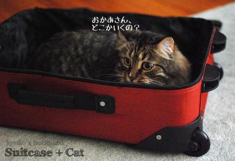 スーツケースと猫_b0253205_12563595.jpg