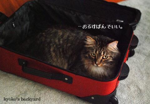 スーツケースと猫_b0253205_1257378.jpg