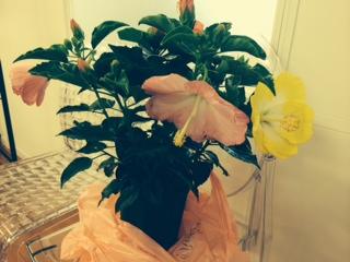 寄せ植えのお花♪_f0243509_13424354.jpg