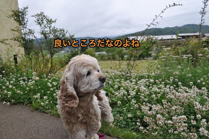 b0067012_2515779.jpg