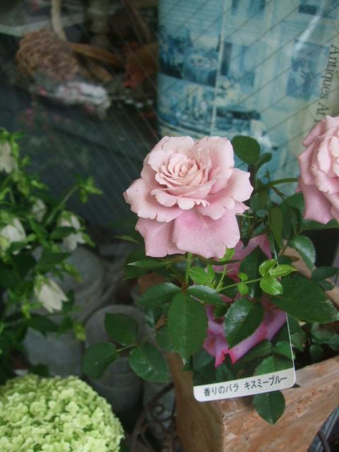 オークリーフ(6月の花たち)_f0049672_1611046.jpg