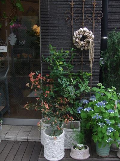 オークリーフ(6月の花たち)_f0049672_16142691.jpg