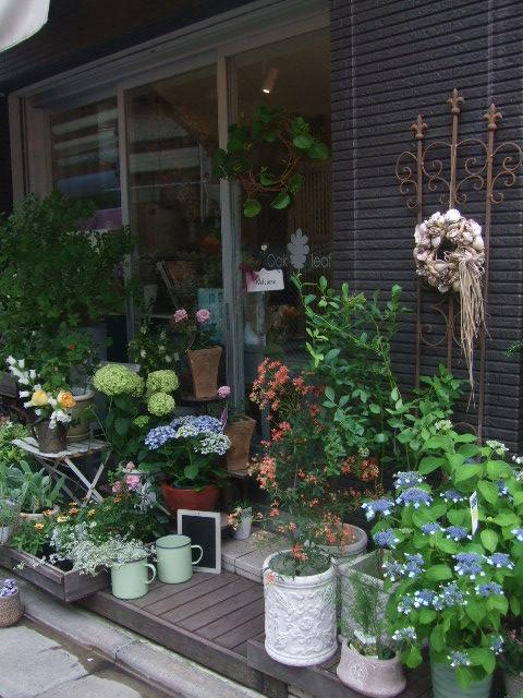 オークリーフ(6月の花たち)_f0049672_16151950.jpg