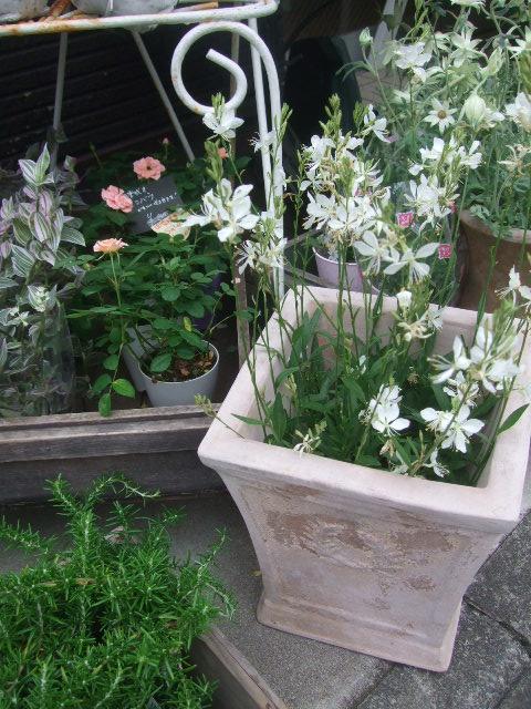 オークリーフ(6月の花たち)_f0049672_16152943.jpg