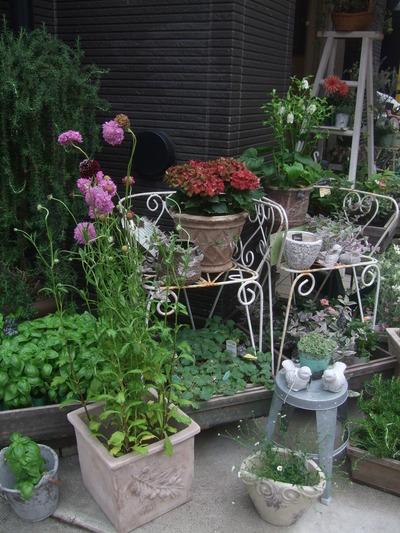 オークリーフ(6月の花たち)_f0049672_16154916.jpg