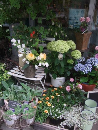 オークリーフ(6月の花たち)_f0049672_1617733.jpg