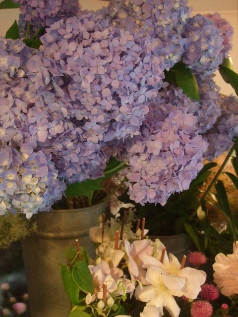 オークリーフ(6月の花たち)_f0049672_16321827.jpg