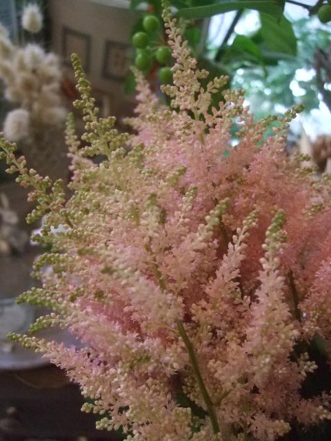 オークリーフ(6月の花たち)_f0049672_1637211.jpg