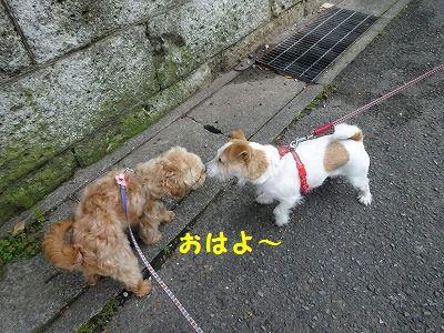 超音波治療ってスゴイ_e0222588_16192415.jpg