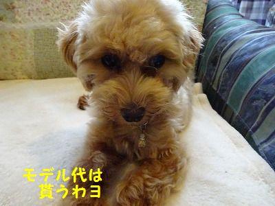 超音波治療ってスゴイ_e0222588_16195892.jpg