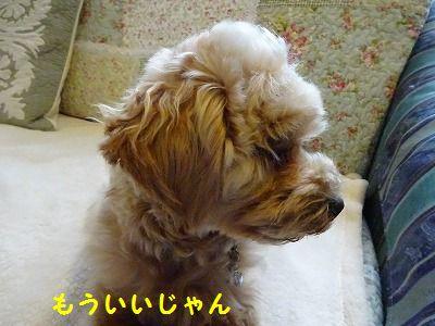 超音波治療ってスゴイ_e0222588_16200093.jpg
