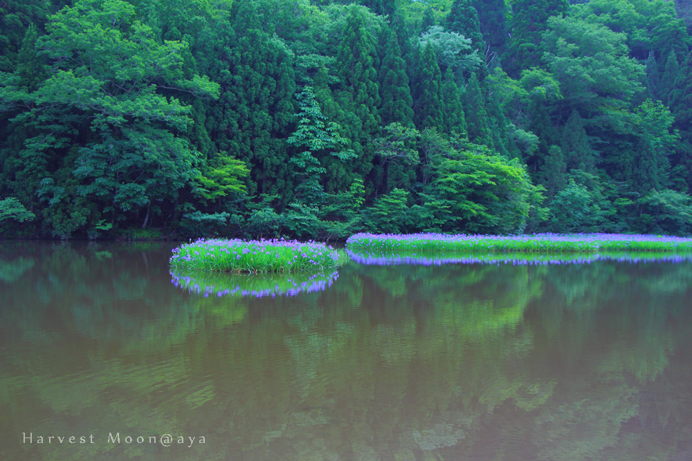 森の憩い_b0208495_22551544.jpg
