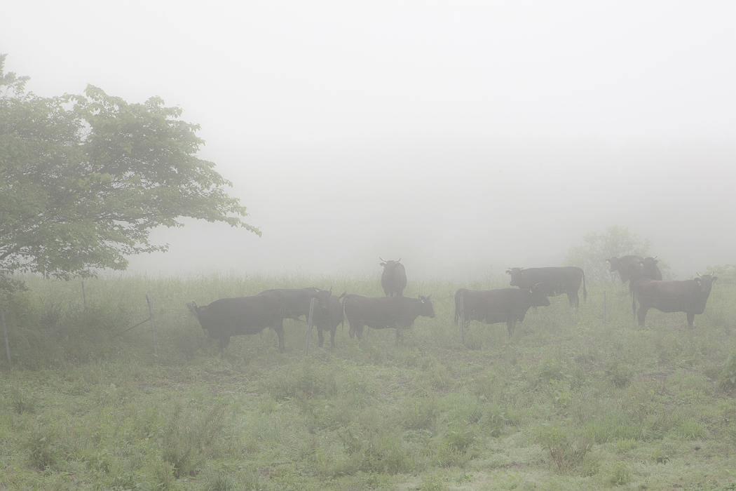 牧場の朝〔マキバノアサ〕_c0077395_624443.jpg