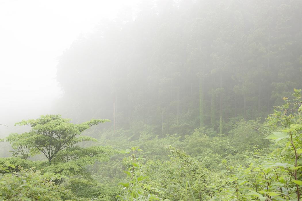 牧場の朝〔マキバノアサ〕_c0077395_6253273.jpg