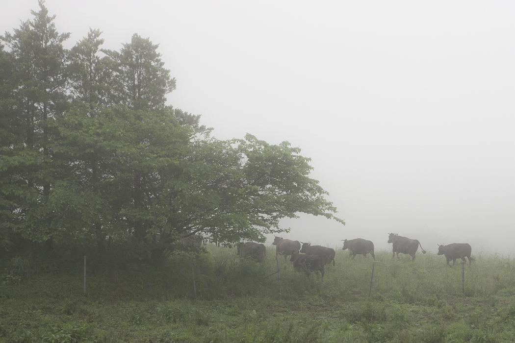 牧場の朝〔マキバノアサ〕_c0077395_6331214.jpg