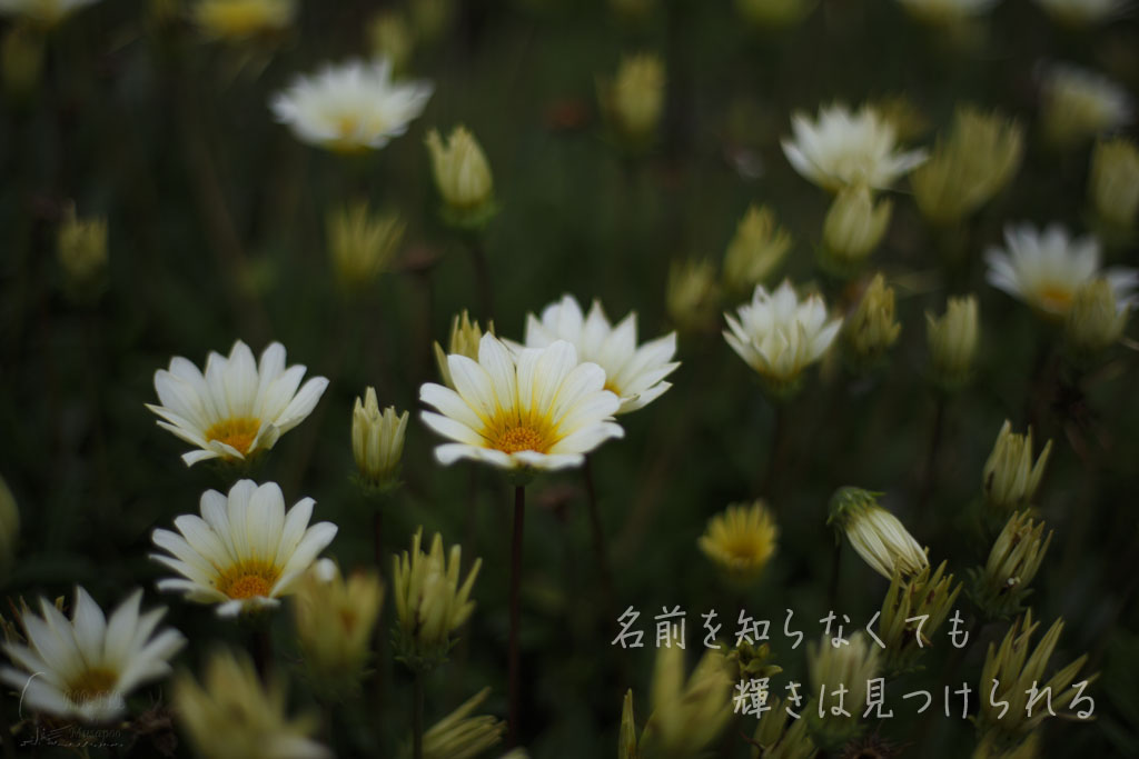 海岸の公園に咲いていた_b0064396_16374946.jpg