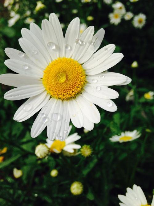 Spring has sprung!_e0169998_17273582.jpg