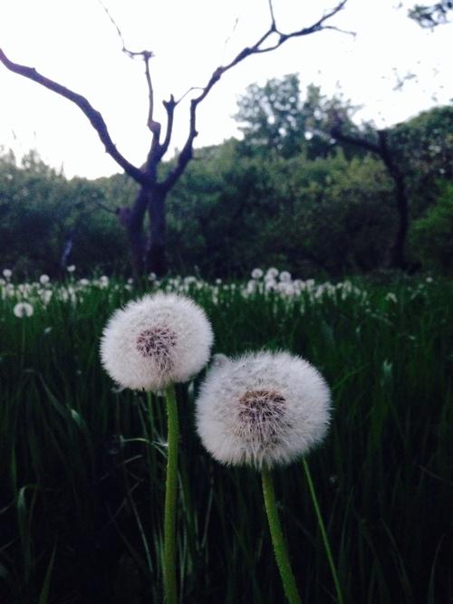 Spring has sprung!_e0169998_1729246.jpg