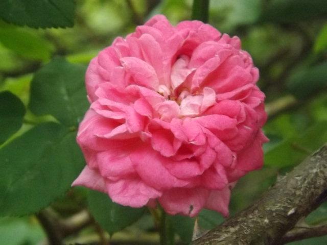 庭の花_f0019498_818322.jpg