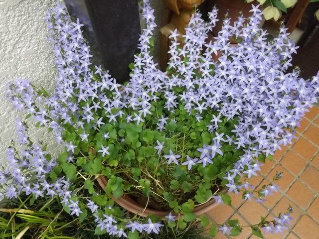 庭の花_f0019498_8195499.jpg