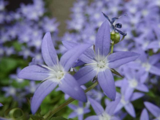 庭の花_f0019498_8201413.jpg