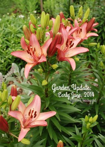 花壇と菜園の様子(6月上旬)_b0253205_046510.jpg