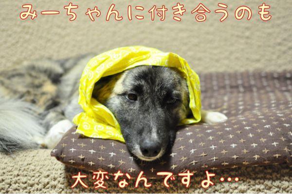 f0329311_21283329.jpg