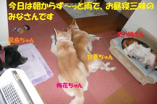 f0121712_15463231.jpg