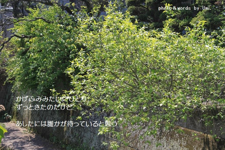 f0351844_09042466.jpg