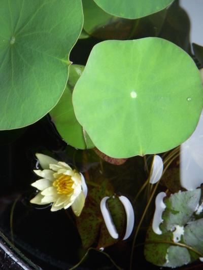 水辺の植物。。。_a0229658_10181037.jpg