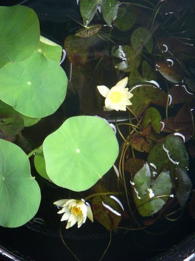 水辺の植物。。。_a0229658_10183175.jpg