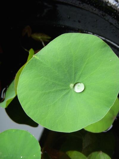 水辺の植物。。。_a0229658_10214447.jpg