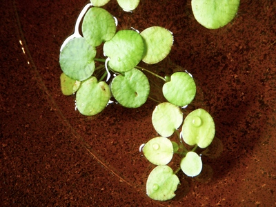 水辺の植物。。。_a0229658_10312795.jpg