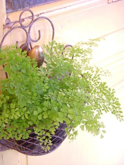 水辺の植物。。。_a0229658_10315175.jpg