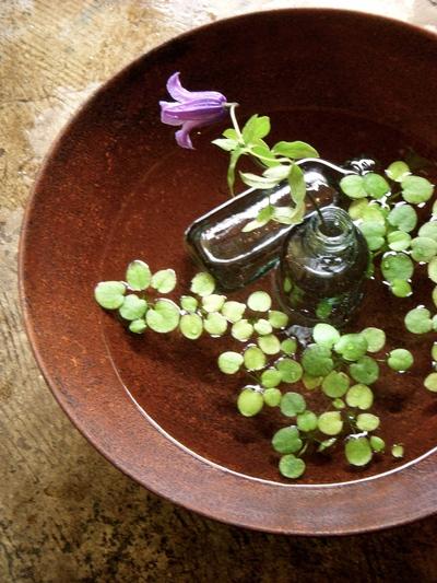 水辺の植物。。。_a0229658_10405640.jpg