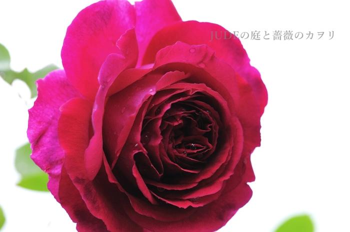 c0278671_20123694.jpg