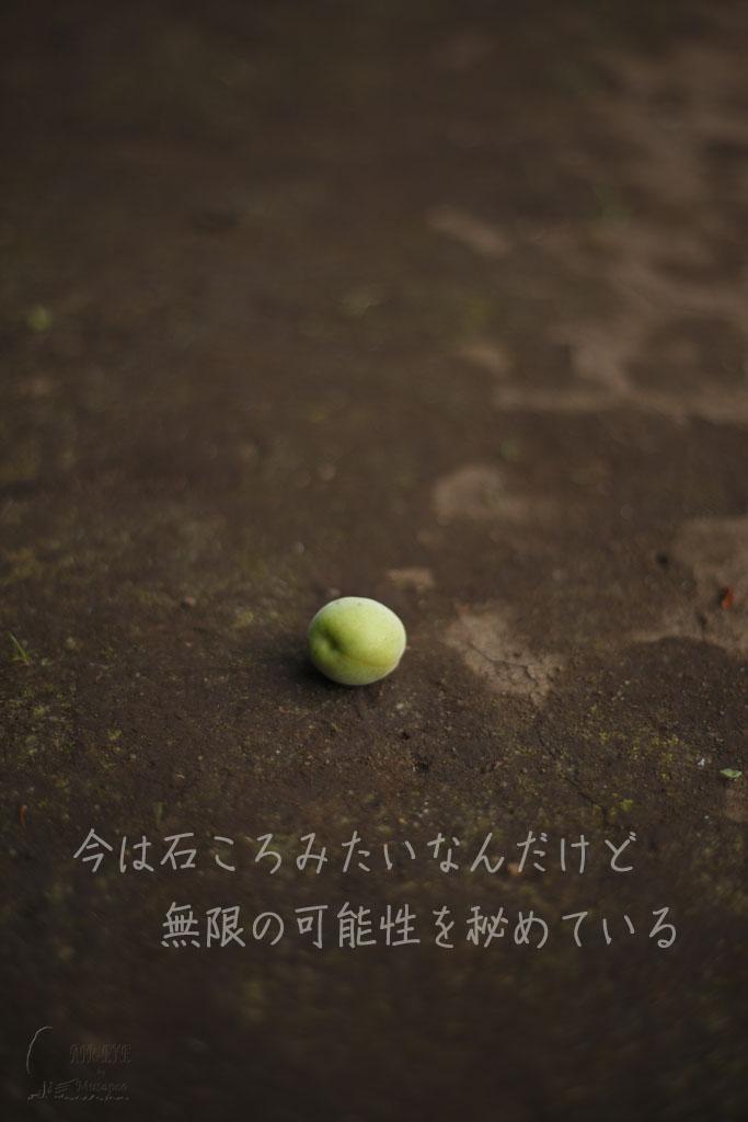 梅の実_b0064396_17265724.jpg