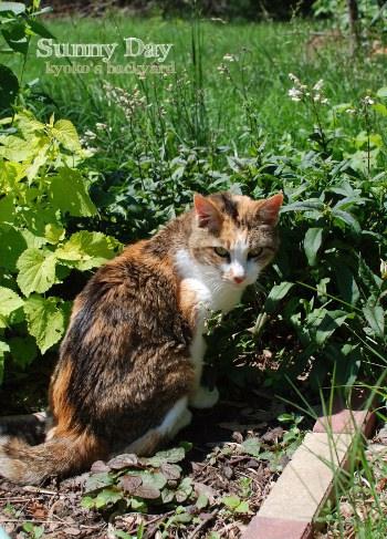 花壇の中でゴキゲンな猫_b0253205_1502892.jpg