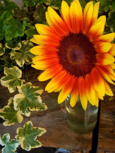 ご注文のお花たち。。。_a0229658_2138051.jpg
