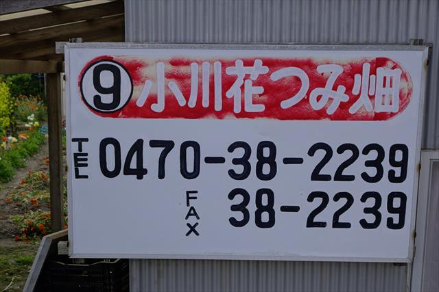 b0144672_19511276.jpg