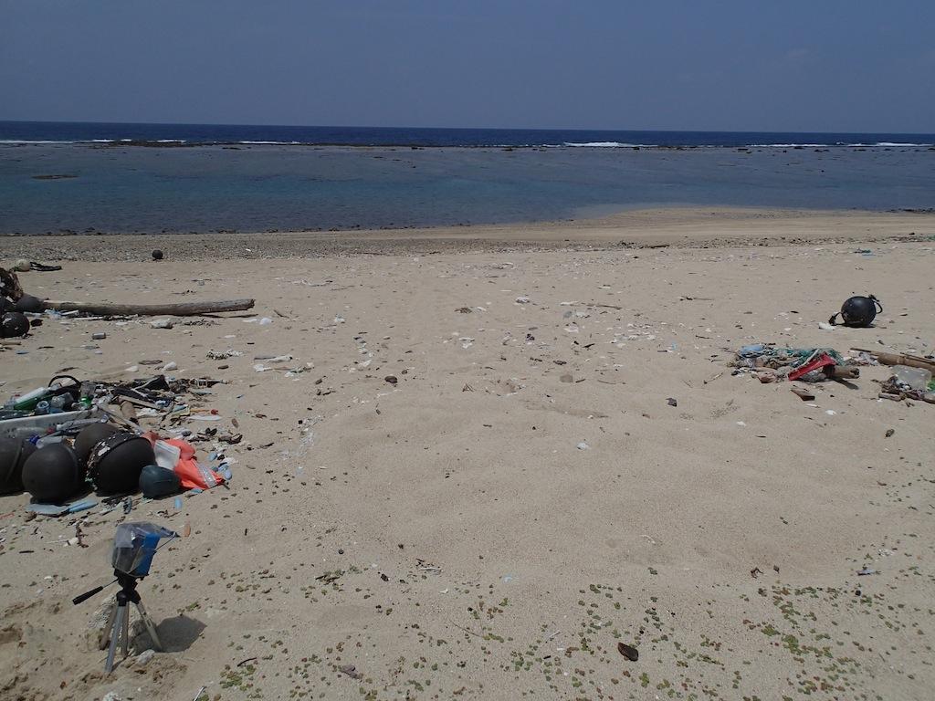 6/13 石川海岸ウミガメ調査_a0010095_16481162.jpg
