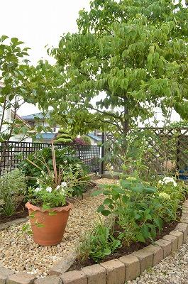 2014年6月 河内長野市 アプローチ植栽_a0233896_11141911.jpg