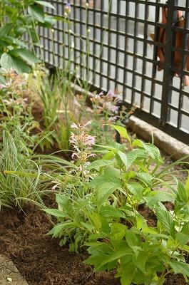 2014年6月 河内長野市 アプローチ植栽_a0233896_11242032.jpg