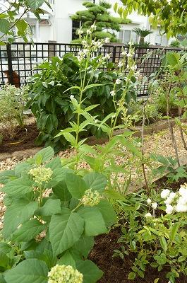 2014年6月 河内長野市 アプローチ植栽_a0233896_11292726.jpg