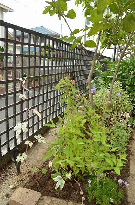 2014年6月 河内長野市 アプローチ植栽_a0233896_11295678.jpg