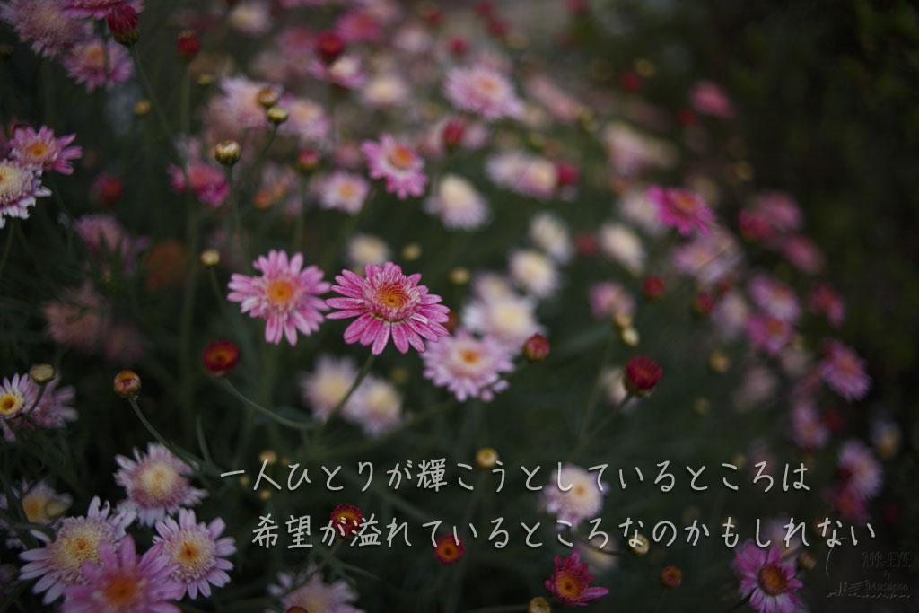 玄関のノービアの花に初めてピントを持っていった_b0064396_23050401.jpg